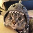 Cat Beanie Discord Pfp