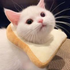 Cat Bread Discord Pfp