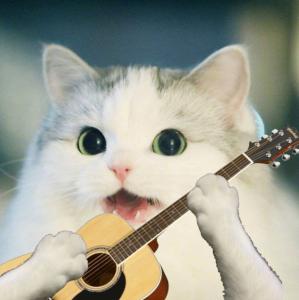 Guitar Cat Discord Pfp