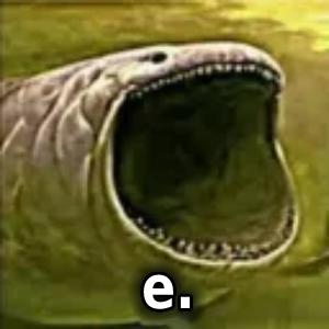 e. Discord Pfp